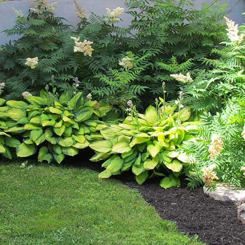 plate bande de fleurs vivaces recherche google jardinage pinterest best garden oasis. Black Bedroom Furniture Sets. Home Design Ideas