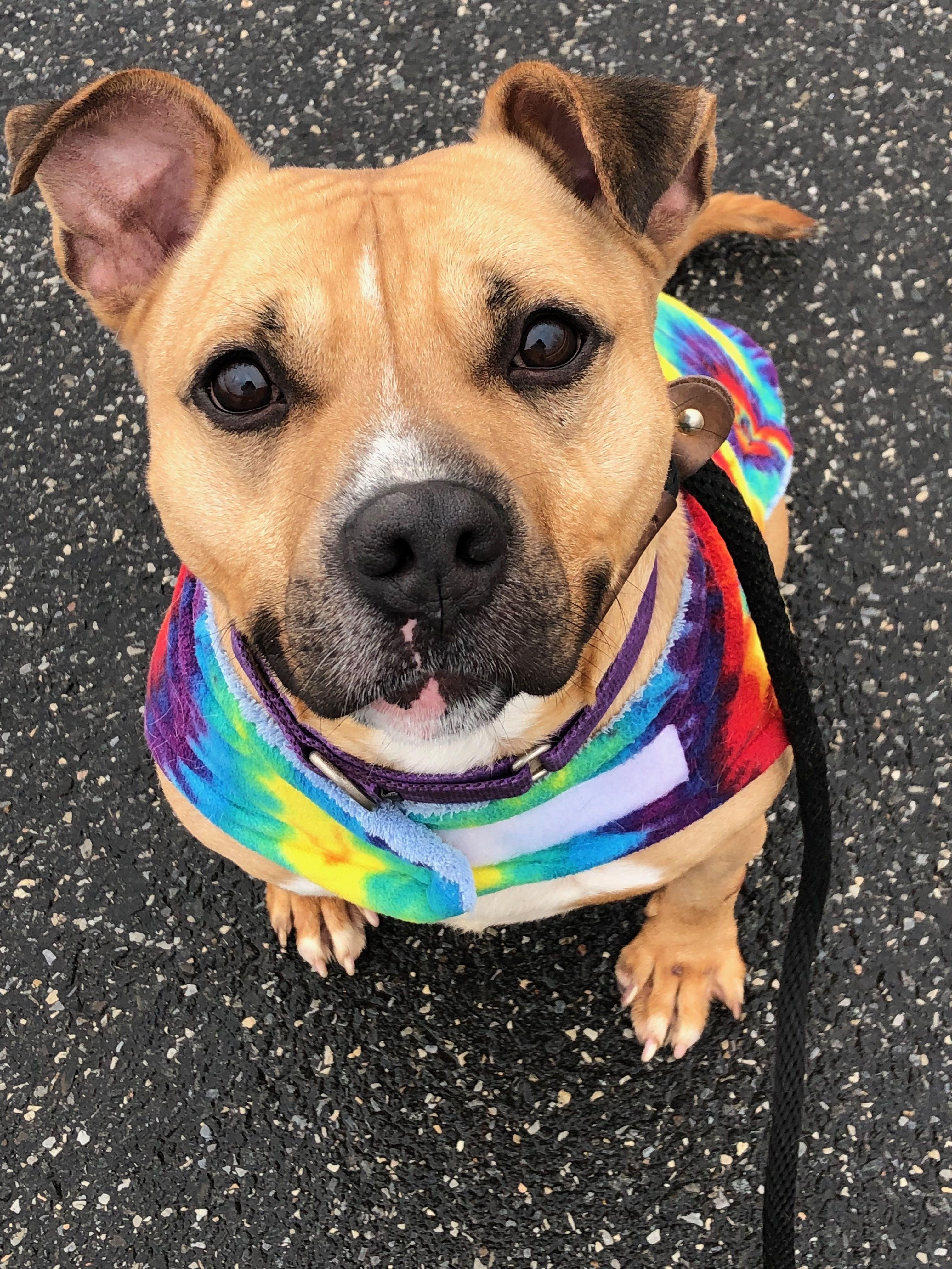 Adopt Mowgli on Pet people, Dog love, Help homeless pets