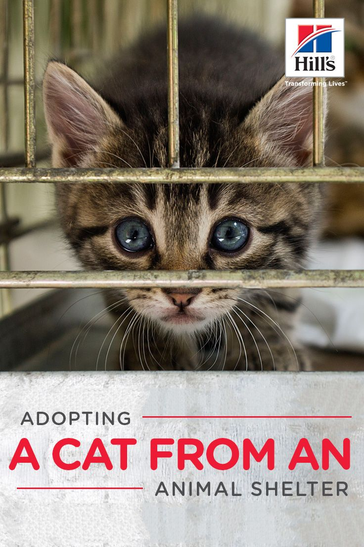 Animal Shelters and Options for Adopting a Cat Animal