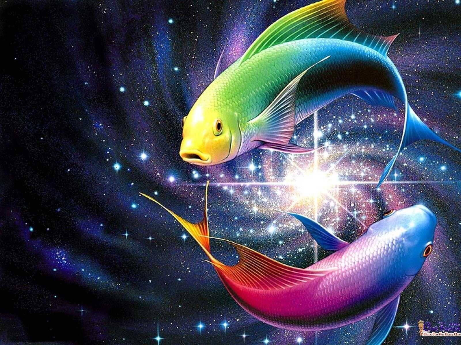 free slanting fish hd wallpapers | fish & sea life! | pinterest