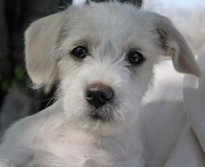 Adopt Zero On Dogs Puppies Terrier Dogs