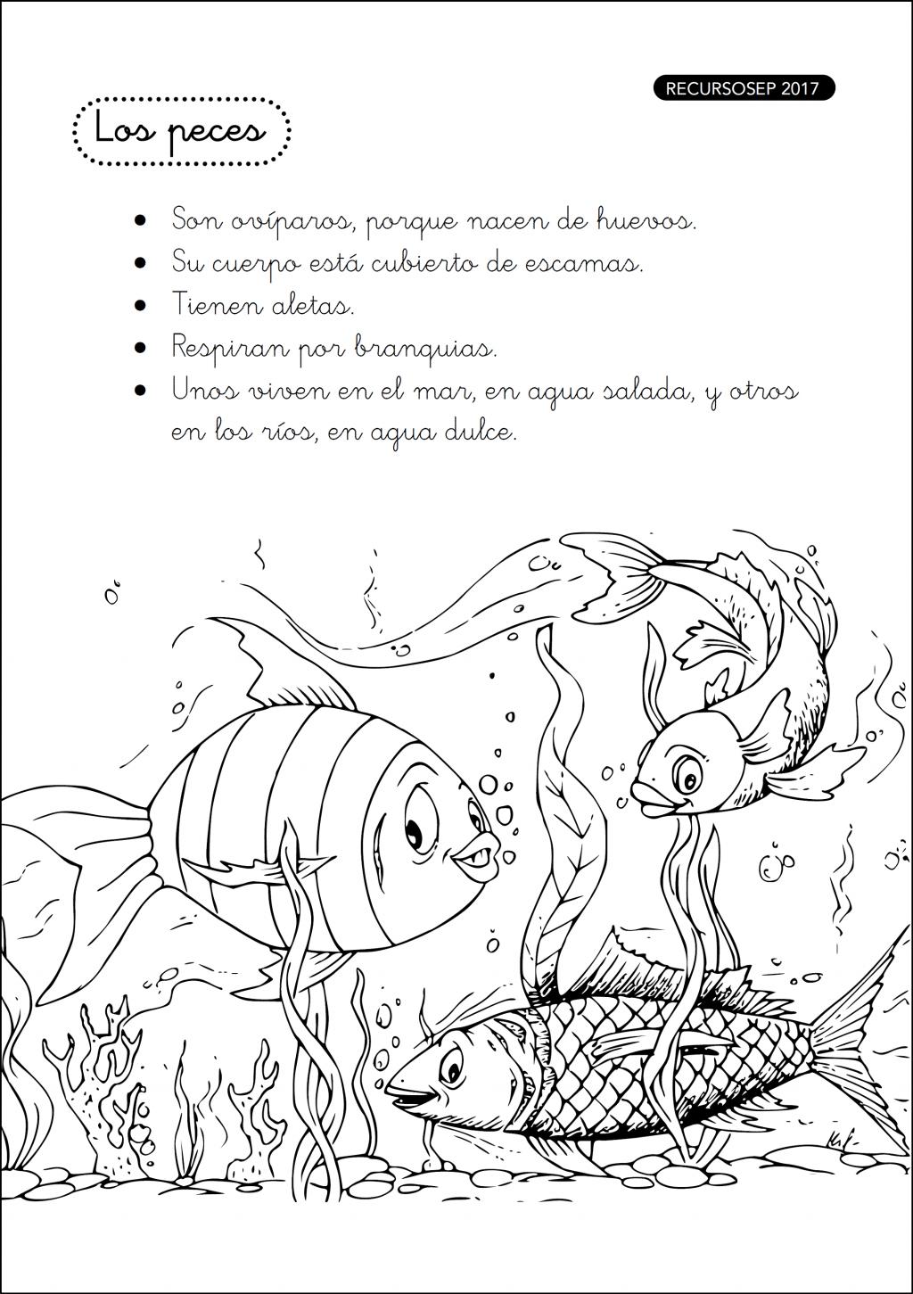 Mi Cuadernillo De Los Animales Vertebrados Primer Ciclo
