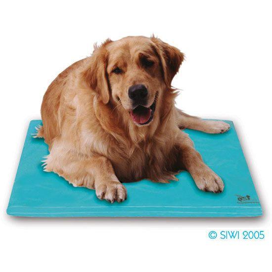 Sitstay Com Canine Cooler Dog Bed 43 78 Cool Dog Beds Cool