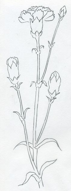 How To Draw Carnation Beautiful Flower Drawings Flower Drawing Flower Sketches