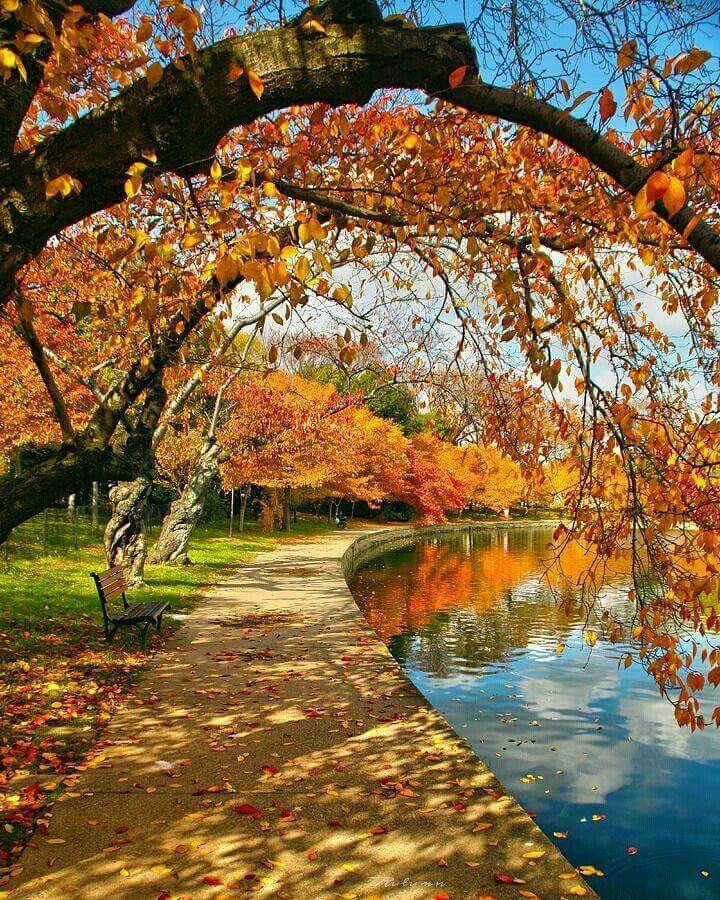 En automne autour du bassin.   Paysage automne, Paysage automnal, Paysage  romantique