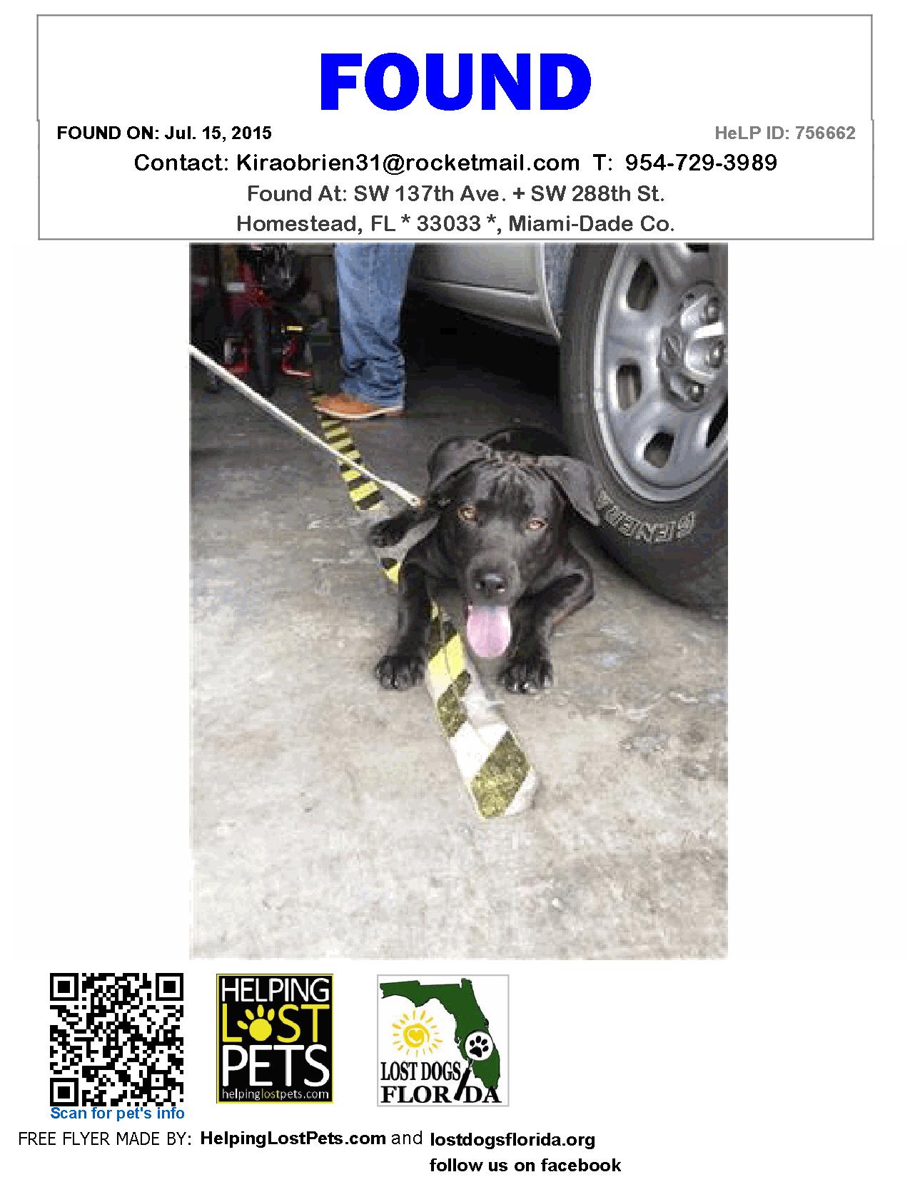 Found Dog Labrador Retriever Homestead Fl United States