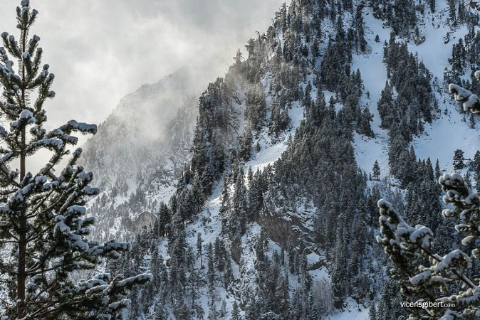 CATALONIA, National Park d'Aigüestortes i Estany de Sant Maurici, Forrest snow  #Catalonia #Catalunya #Barcelona #Pyrenees #Pnaiguestortes #mountain