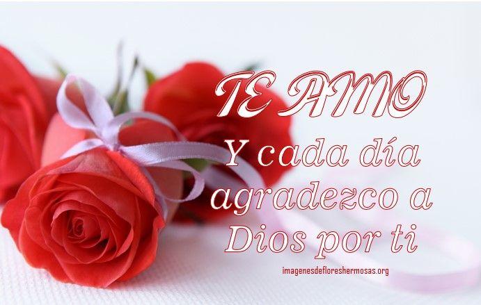 Imagenes De Rosas Hermosas Para Decir Te Amo Flores Hermosas Te