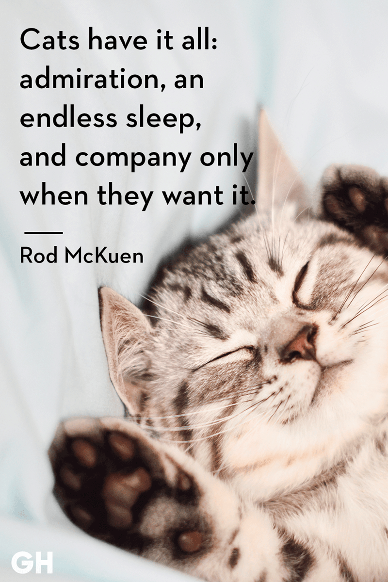Catch 22 Cat Quotes Sum Up Cats Purr Fectly Cat Quotes Funny Kittens Funny Cat Quotes