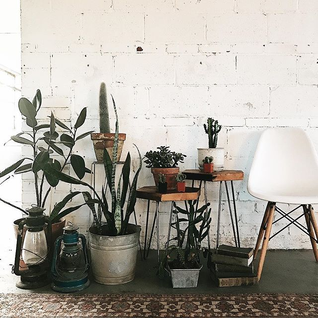 House Plants For Shady Rooms: The Gang's All Here • Our Hexagon Side Tables Are Also The