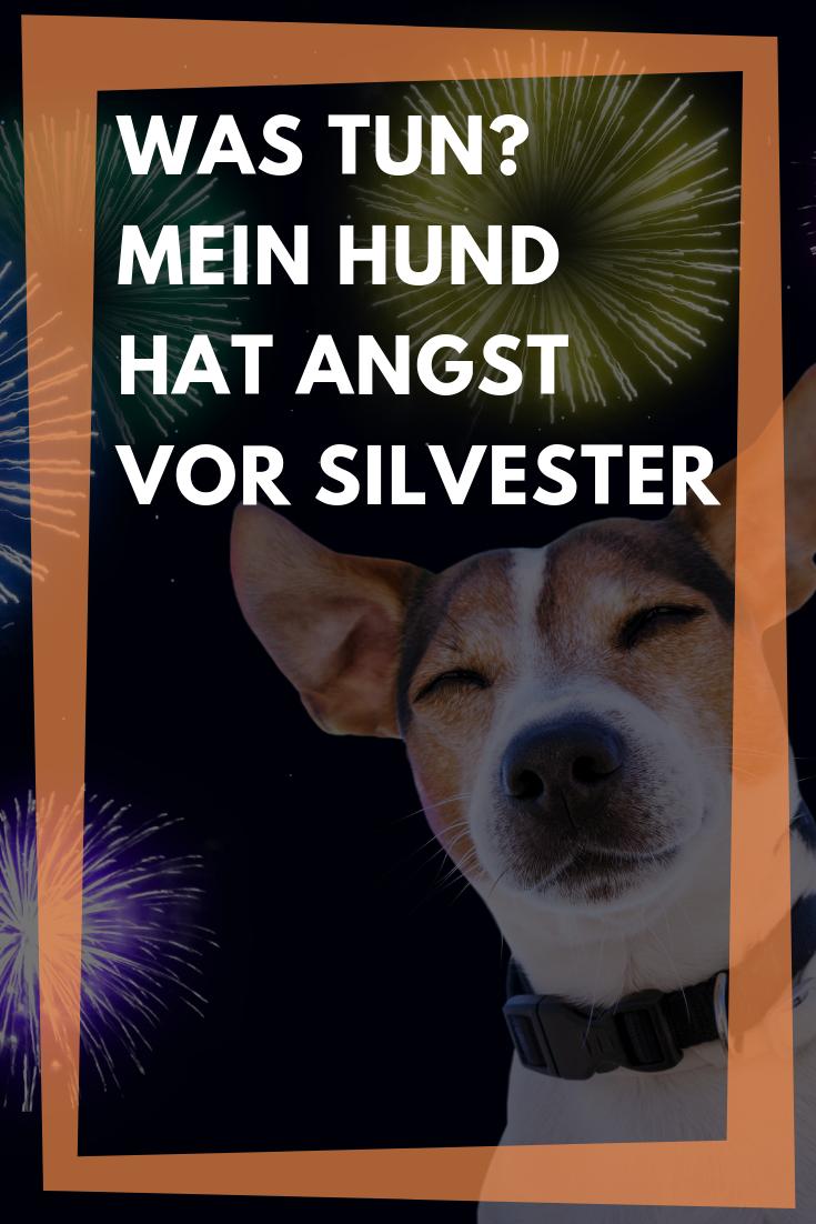 Mein Hund Hat Angst Vor Silvester Tipps Gegen Angst Vor Knallern In 2020 Hund Angst Silvester Silvester Mit Hund