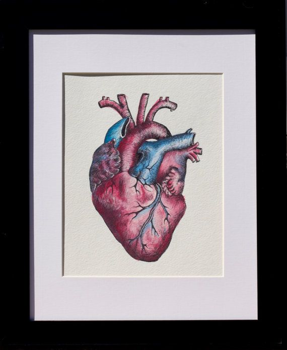 Unique One of a Kind Anatomical Heart Watercolor by ...