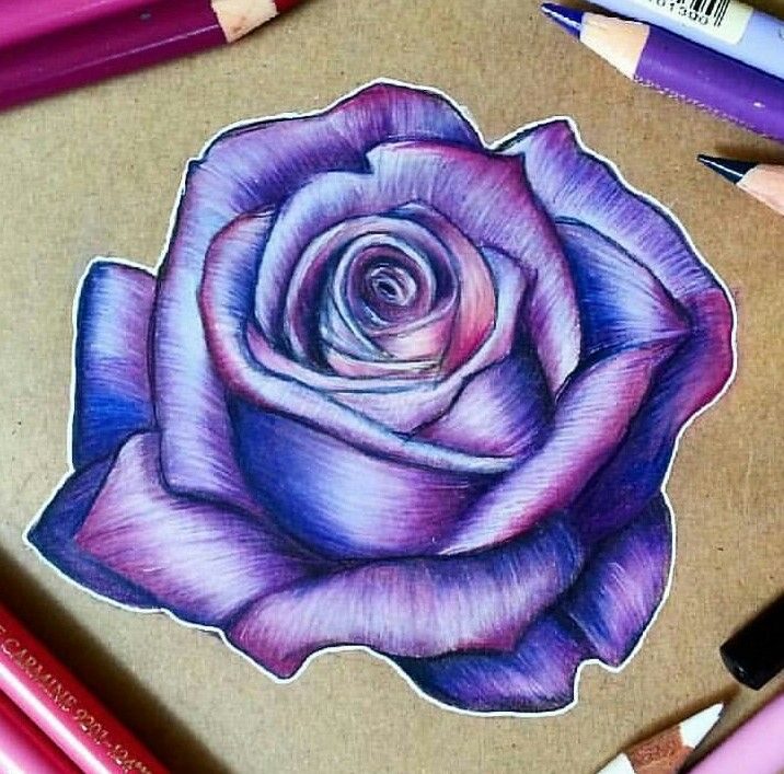 Pin by Sheri Powell on Flowers | Color pencil drawing, Roses drawing, Colorful drawings