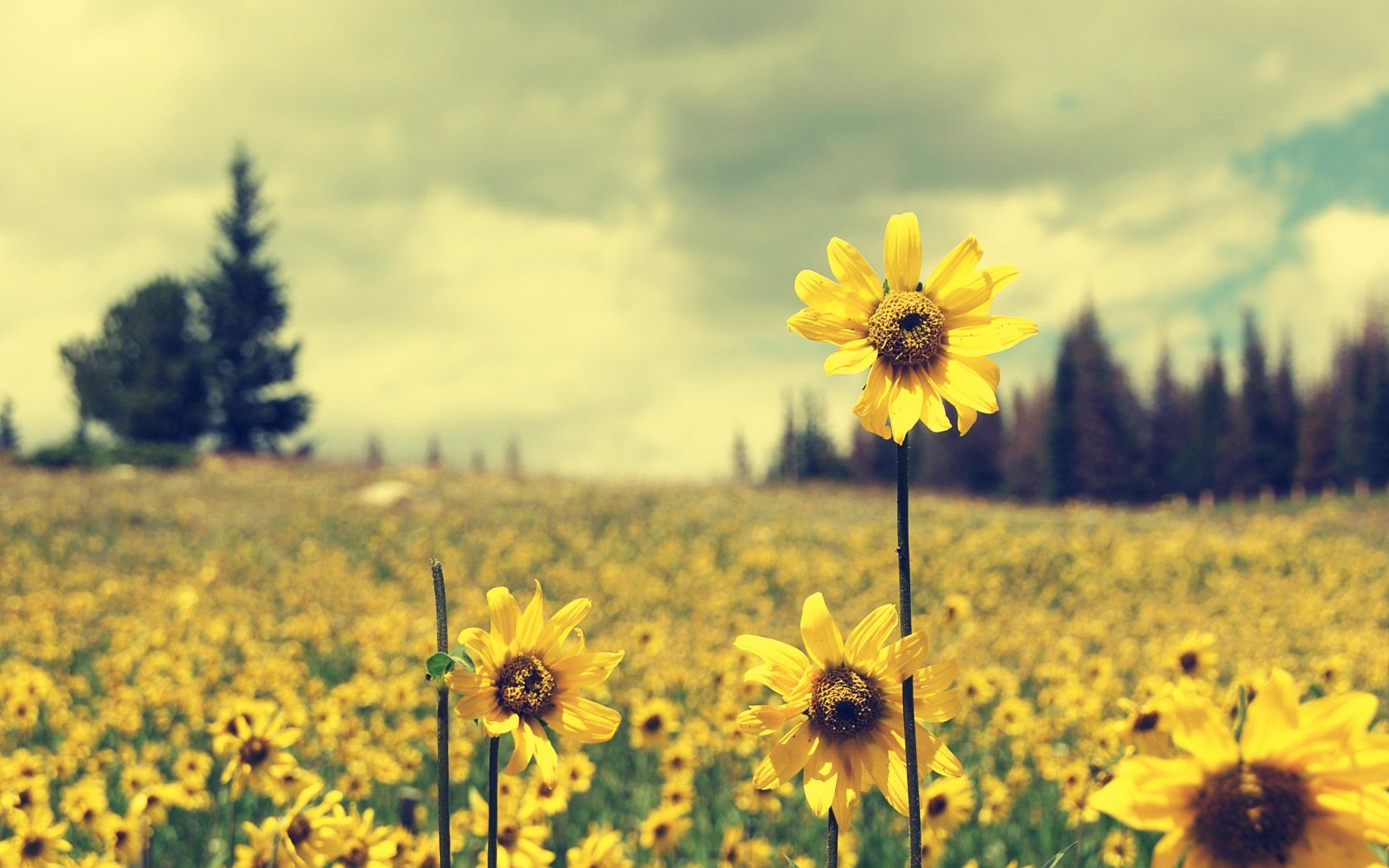 Vintage Sunflower Background ~ Sdeerwallpaper | Lockscreen