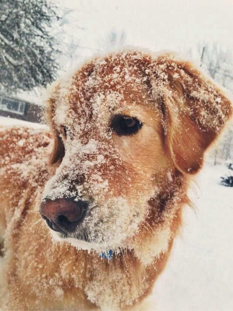 Snow face ruffday Animals, Puppies, Animals beautiful