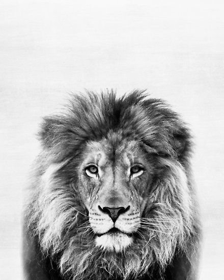 Photo of 'Lion' Poster by juliaemelian
