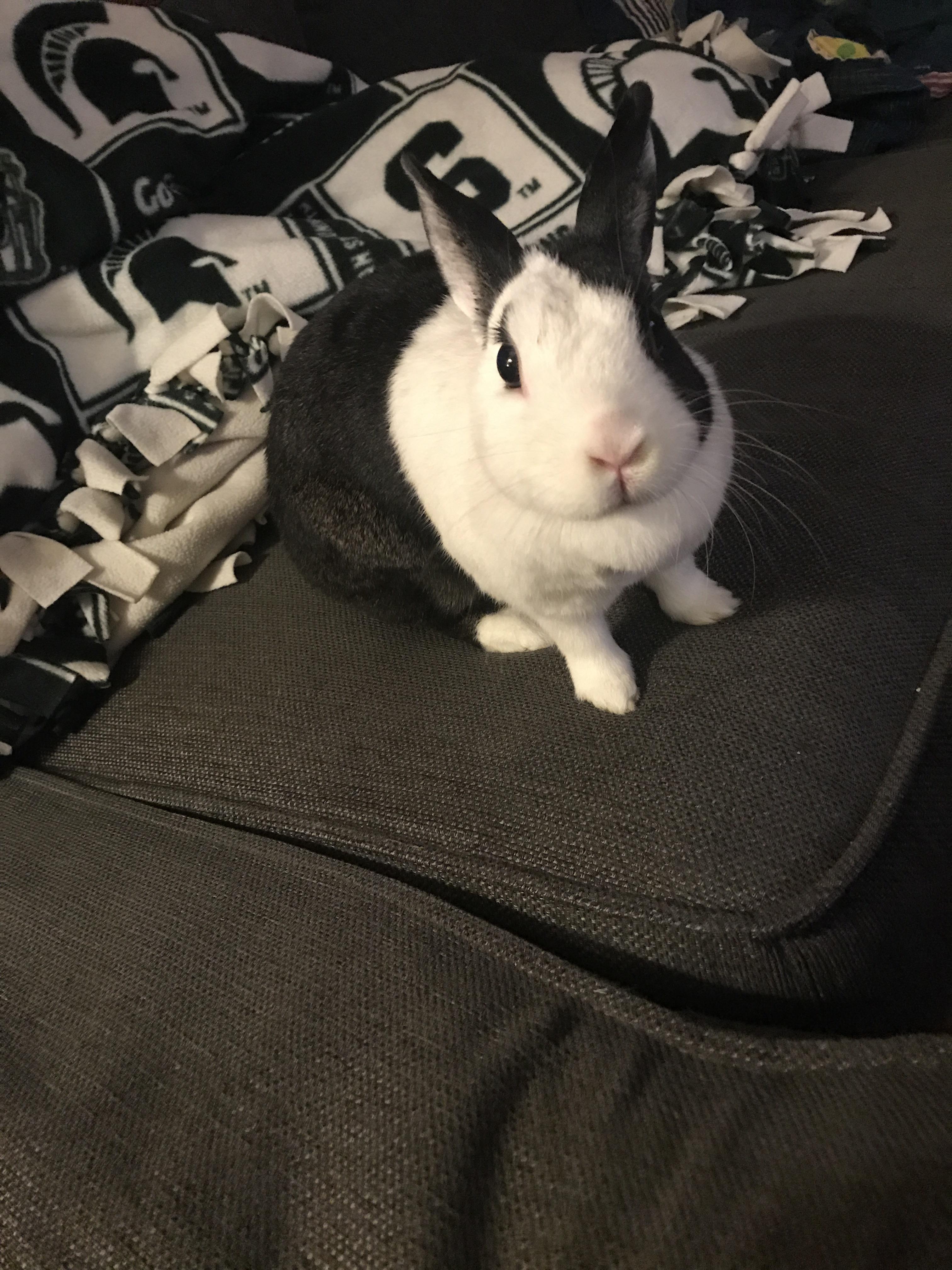 Mid scrunchy nose A rabbit gift idea blog for rabbit