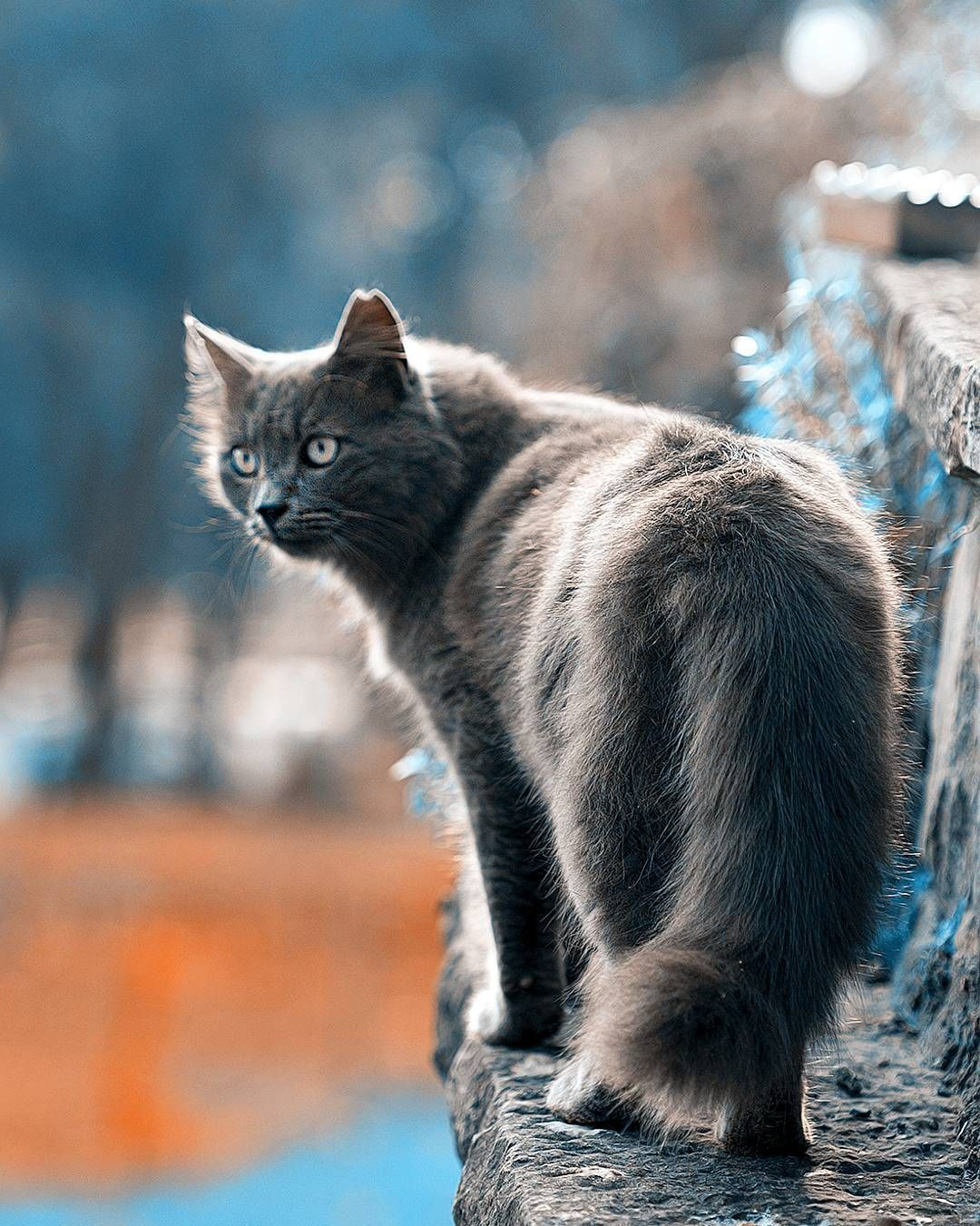 Pin By Vanessa Lechuga On Cats In 2020 Cat Breeds Beautiful Cats Cute Cats