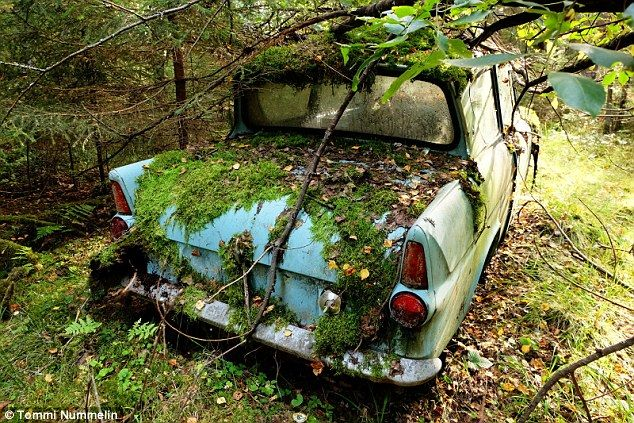 Man Who Abandoned Car In Woods 40 Years Ago Finds It In Same Spot