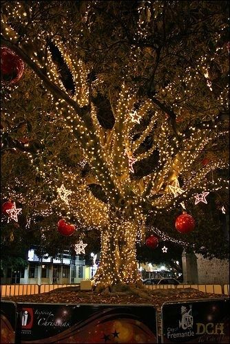 Wow wish I could do a tree up like this. Beautiful