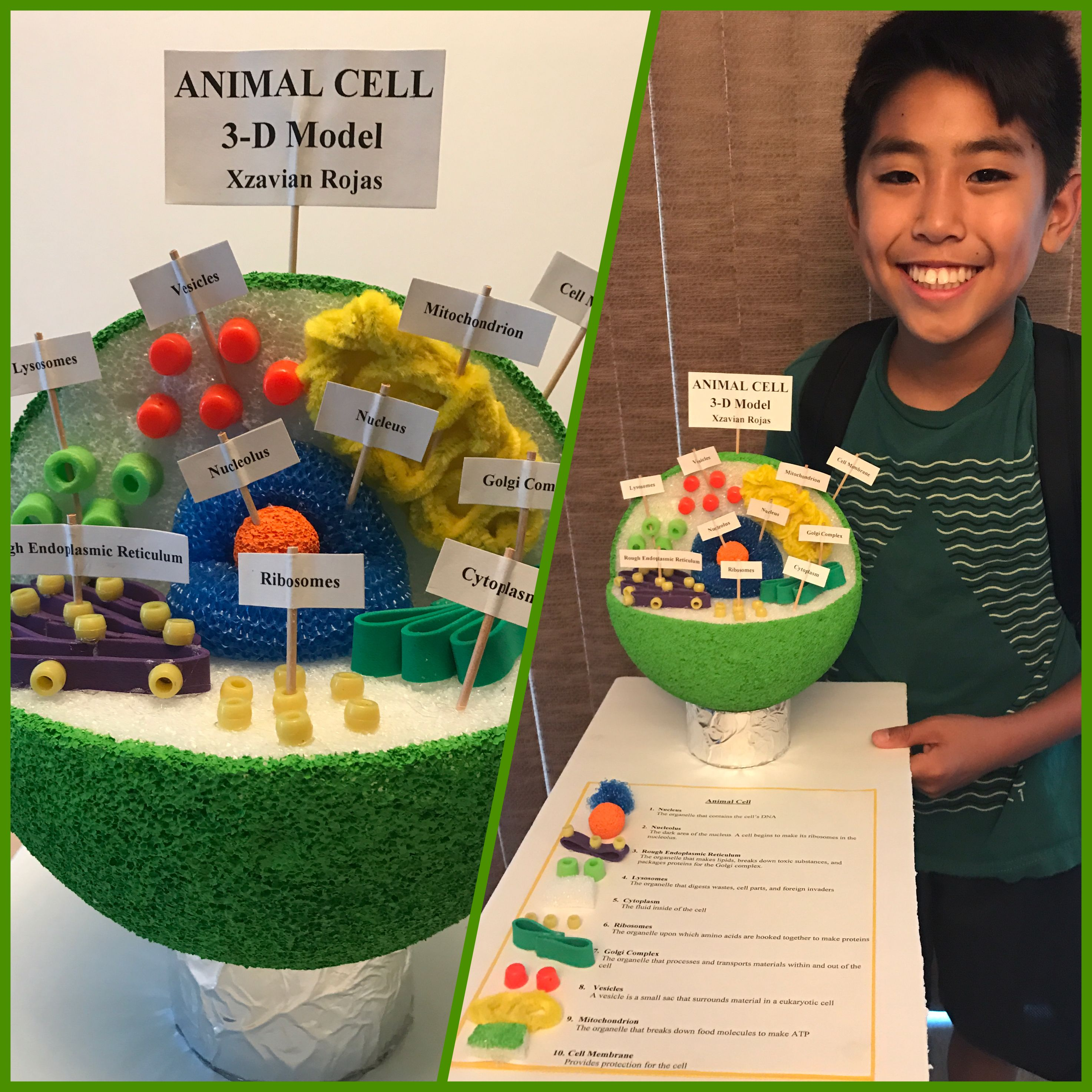 Pin On Animal Cell 7th Grade Science