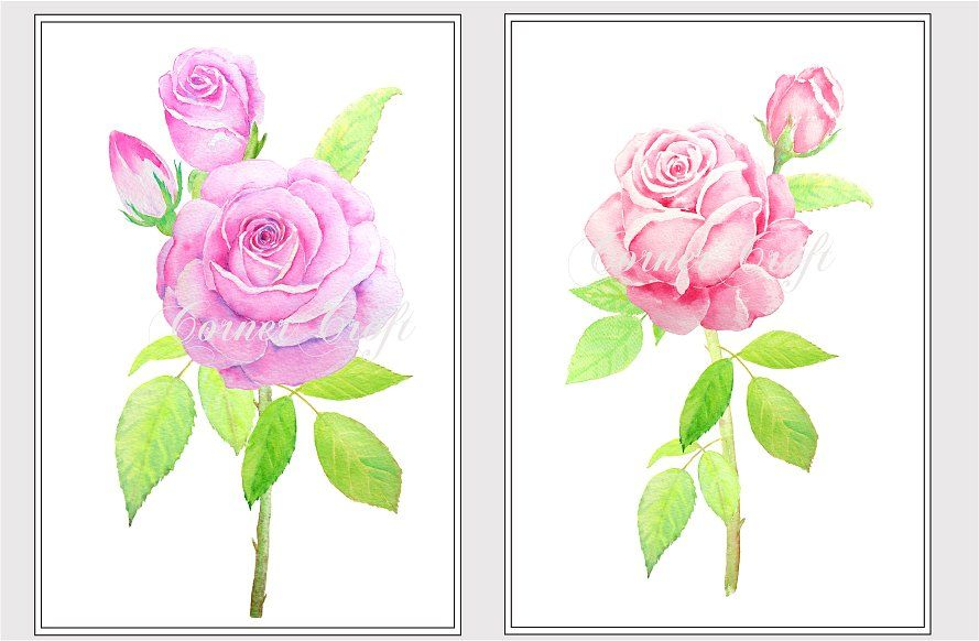 10+ Pink tea rose clipart ideas in 2021