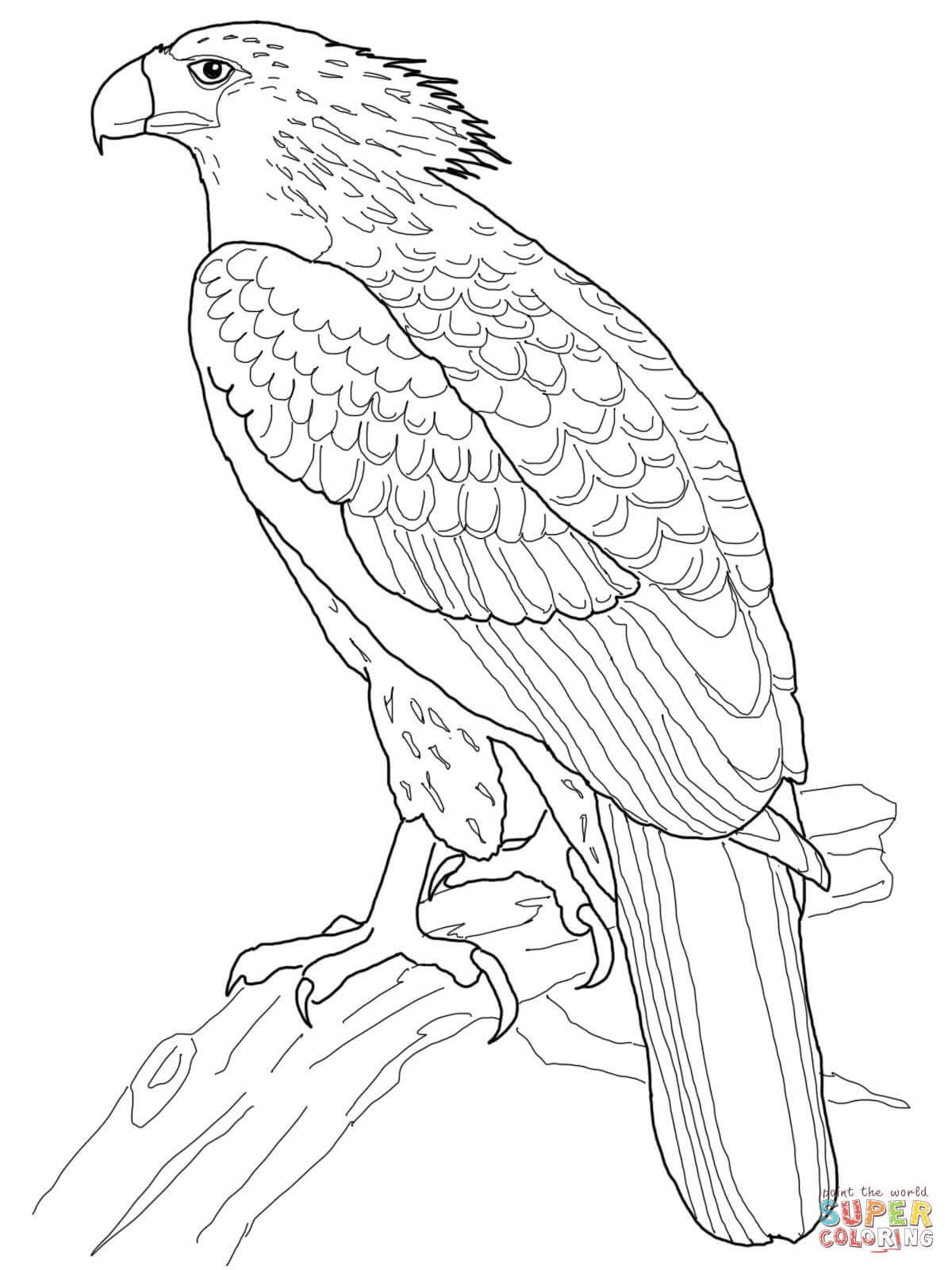 Philippine Eagle Coloring Page From Eagle Category Select