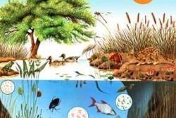 Pin En Ecologia