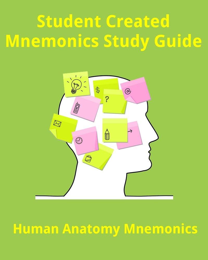 Human Anatomy Mnemonics For Students Health Professionals