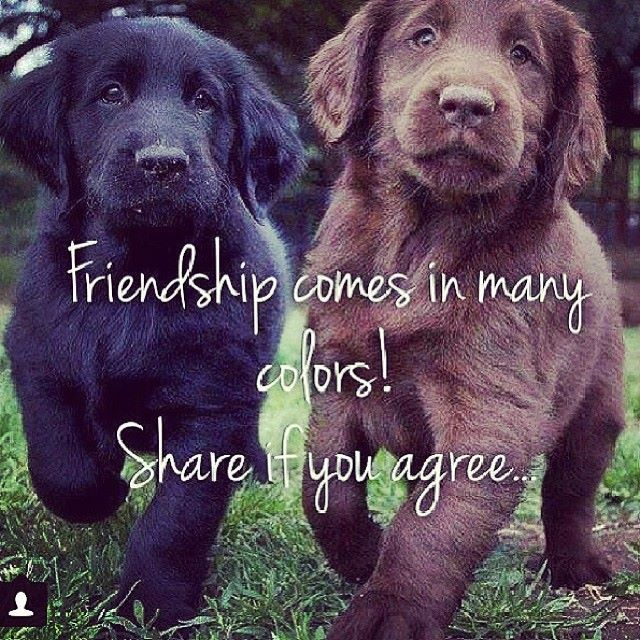 Pin By Christina Cole On Dogs Animal Advocacy Animal Quotes