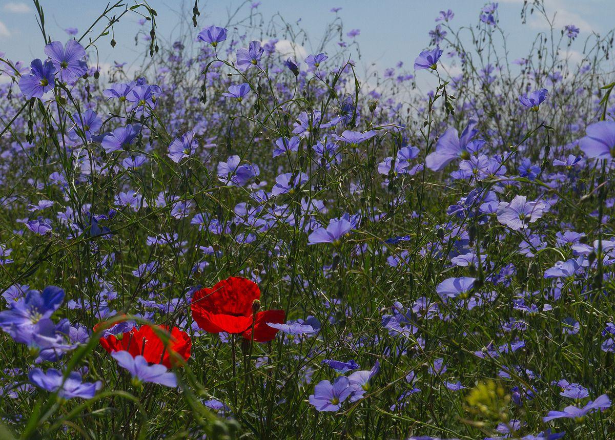 Фотограф Вероника Бабенко (Veronika Babenko) - Просто была весна... #1449503. 35PHOTO