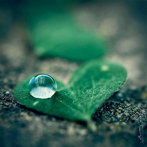 40 Macro Photography of Water Drops water drops Pinterest