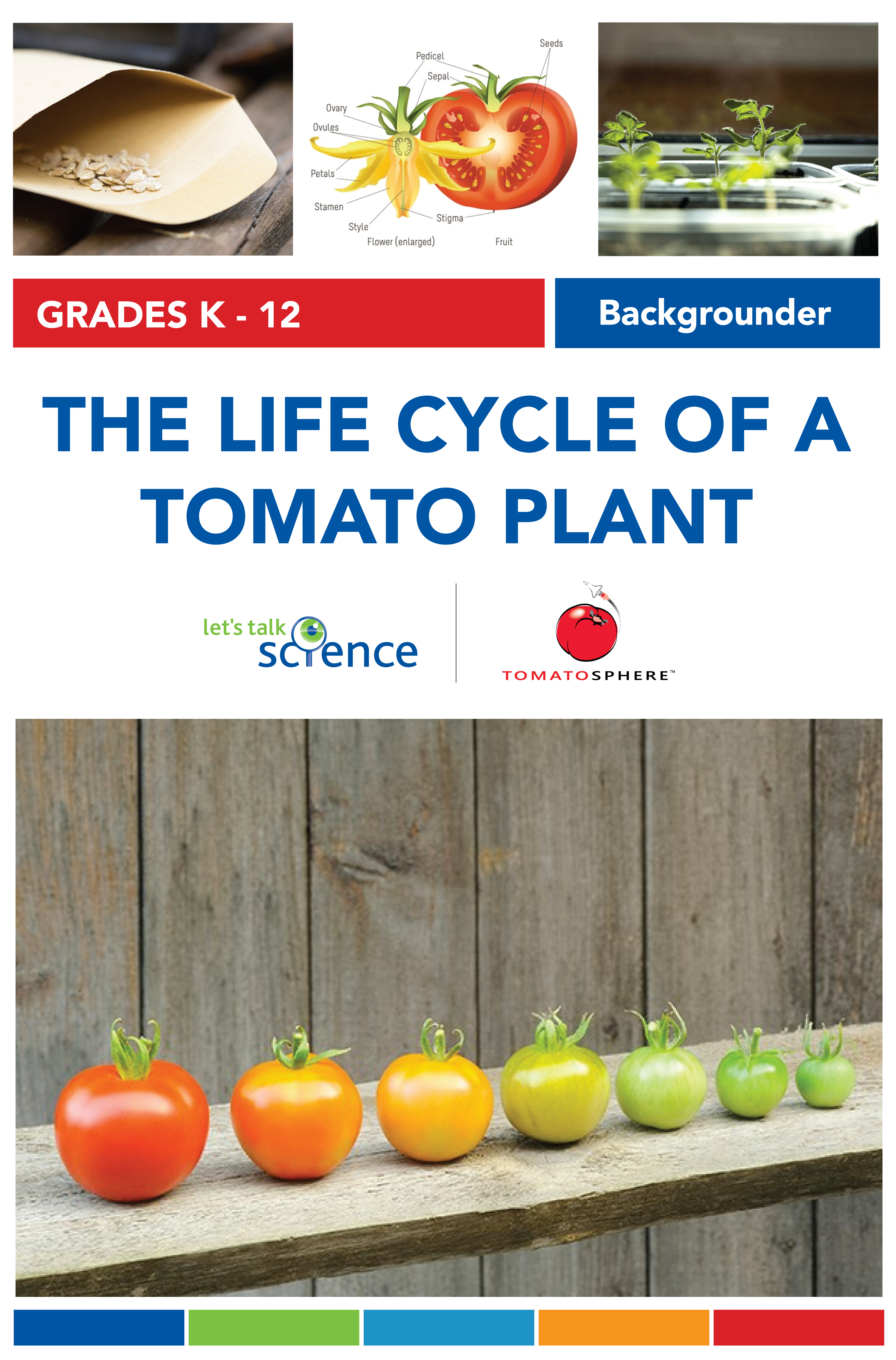 Background Information On The Life Cycle Of A Tomato Plant