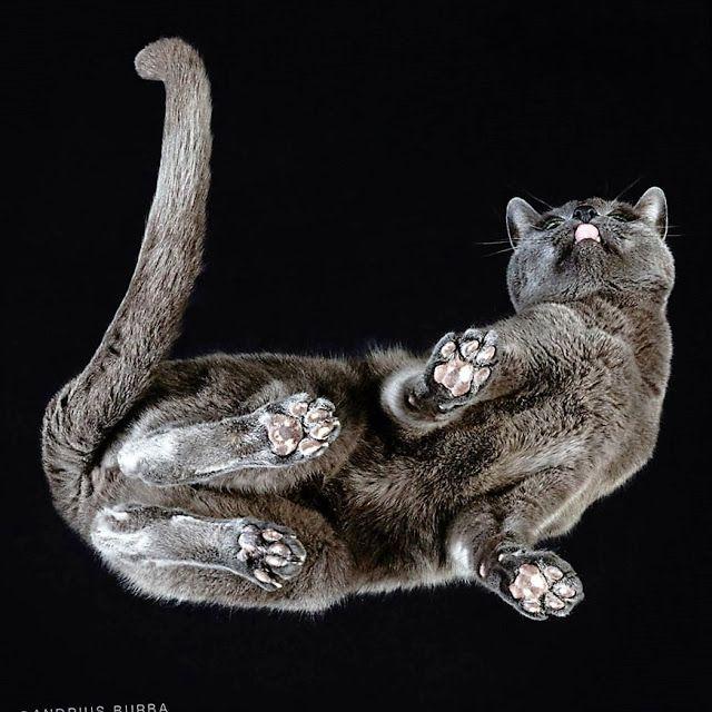 Katten op glazen tafels van onderen gefotografeerd!