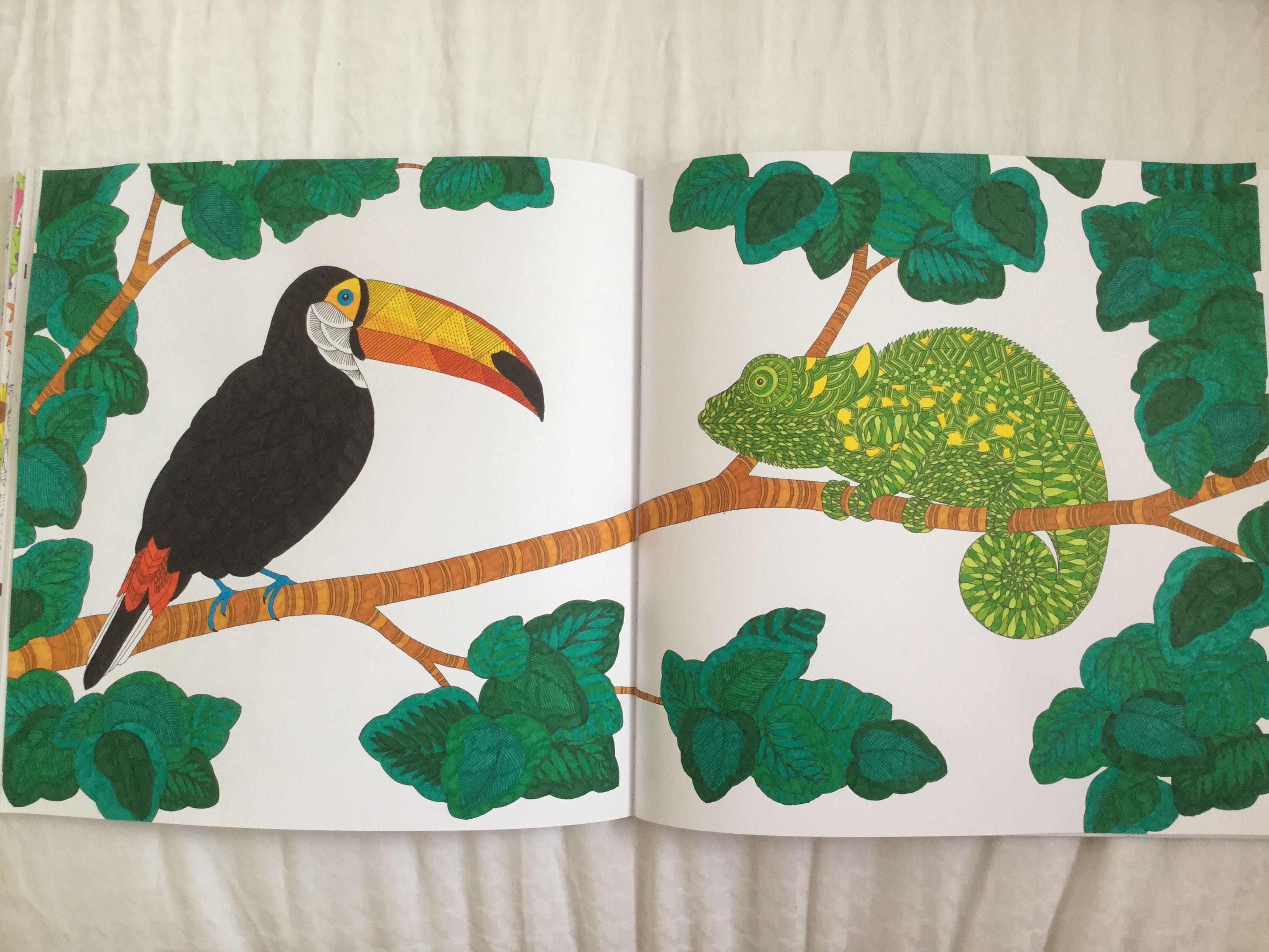 Toucan and Chameleon Animal Kingdom Book, Millie Marotta Animal Kingdom JB Pinterest