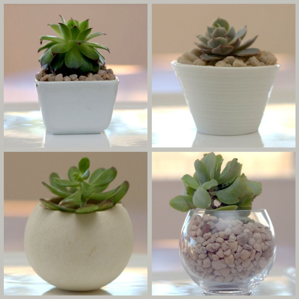 For just about ever I have been wanting to plant some succulents or grow a terrarium.  I have been drooling over photos like these, but have...