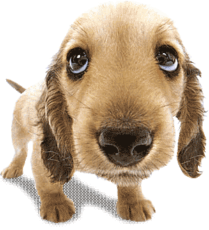 Moving Animation | Animals Zoo Park: Cute Puppy Pictures, Puppy ...