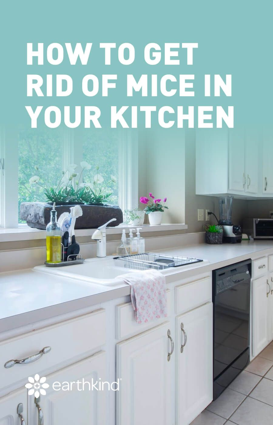 How To Get Rid Of Mice In The Kitchen In 2020 Getting Rid Of Mice Kitchen Homesteading Diy Projects