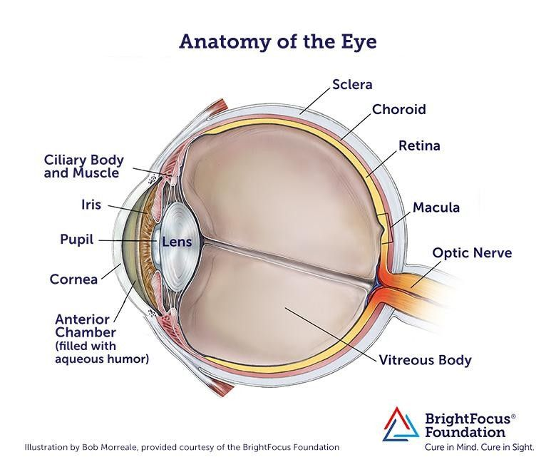 Pin By Royal Rajput On Maharana Pratap Eye Anatomy Anatomy Images Anatomy