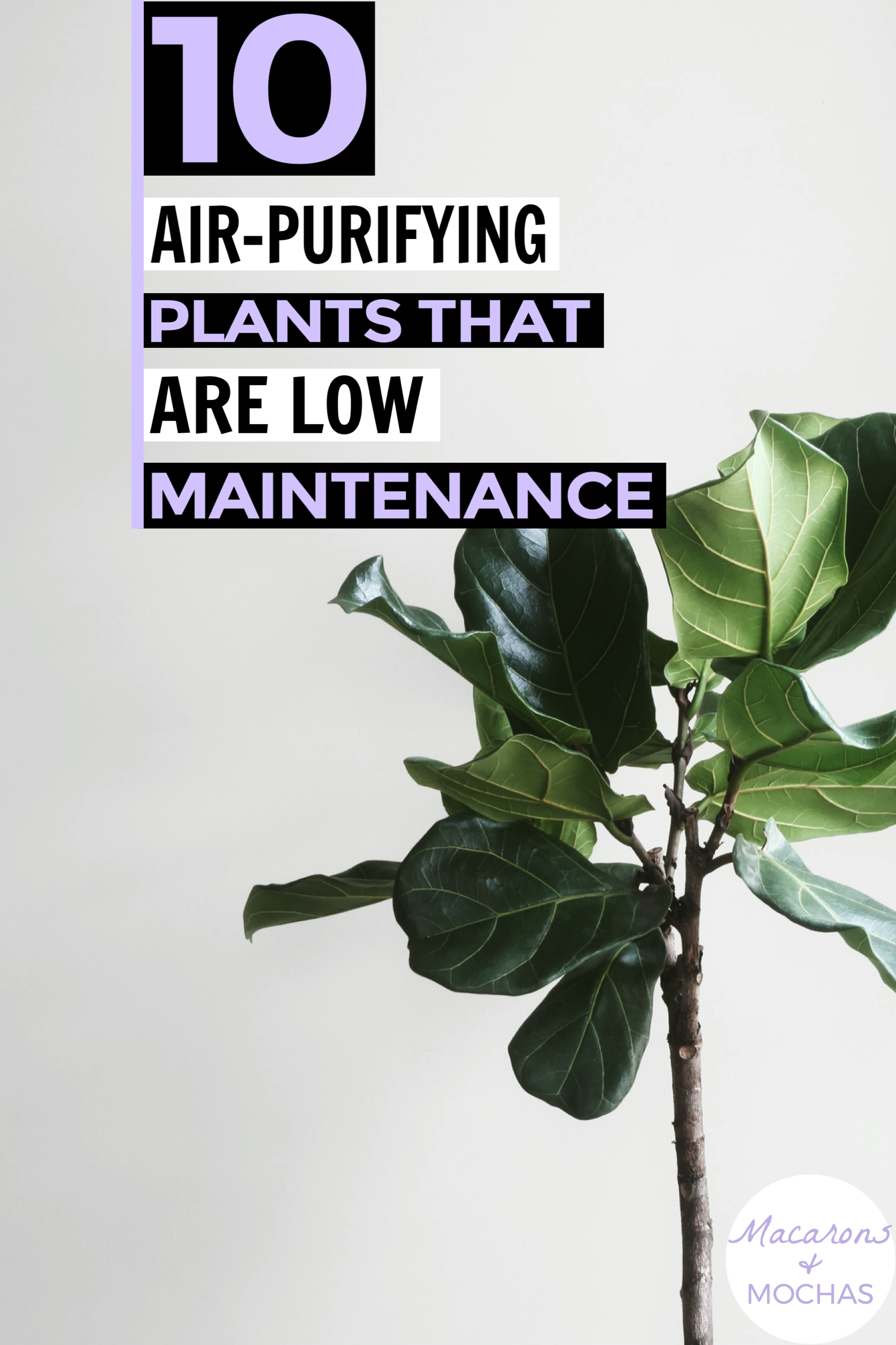 These air purifying plants are SO COOL! I'm so glad I