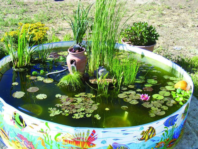 Kiddie pool fish pond bury in the ground and or hide for Plastic garden fish ponds