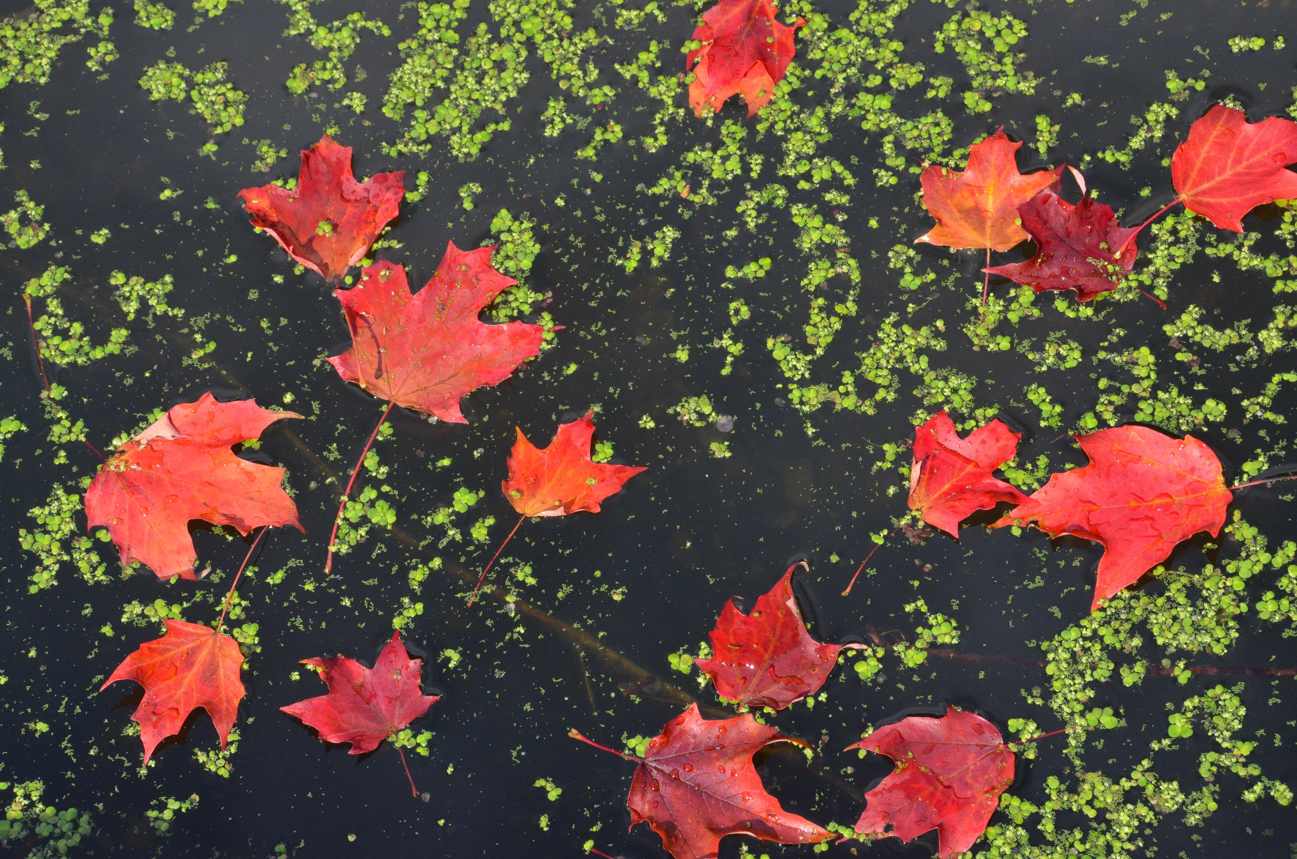 Fall colors: autumn foliage across North America – in pictures #autumnfoliage