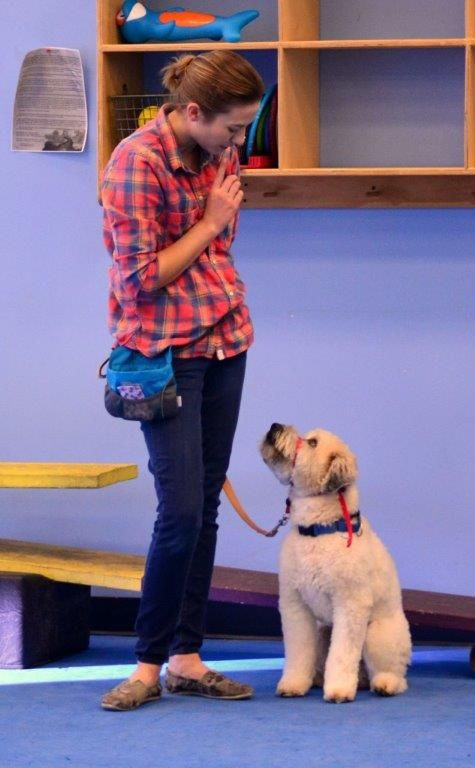 You Might Be A Dog Trainer If Dogs Best Dogs Trainers