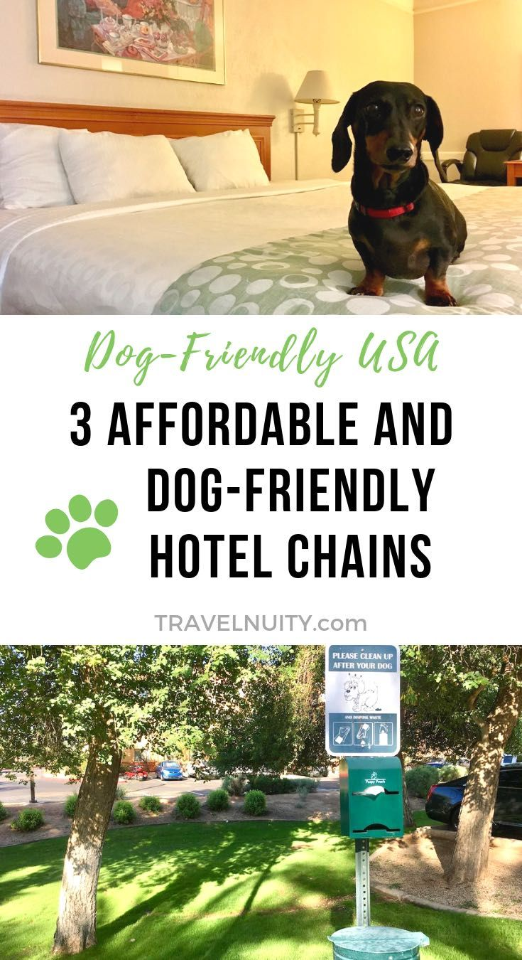 3 Affordable DogFriendly Hotel Chains in the USA Dog