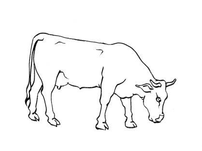 Coloriage vache 1 vaches animaux vaches cerfs dessins pinterest vache coloriage vache et - Dessin d une vache ...