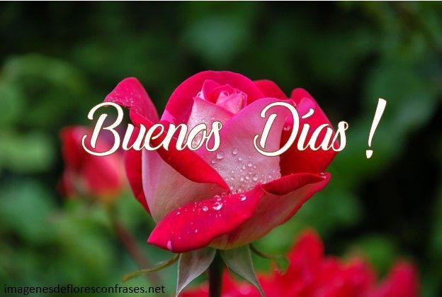 Imágenes De Rosas Para Desear Buenos Días Diomaris Gonzalez