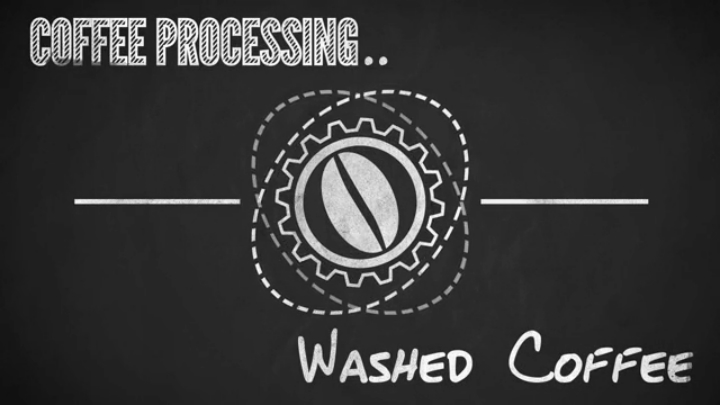 Washed Coffee « Has Blog