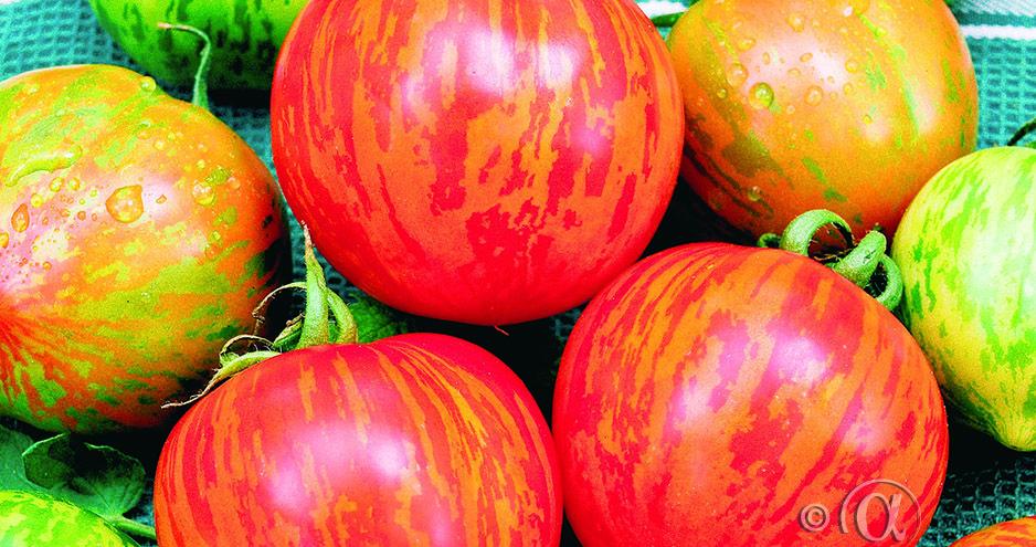 Tomaatti, Tigerella, juovikas