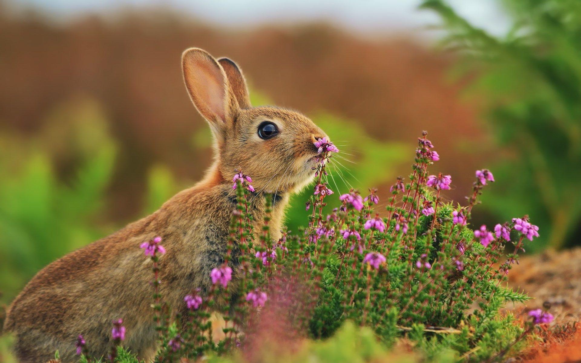 Bunny Wallpapers For Mac Desktop Bunny Wallpaper Rabbit Wallpaper Animal Wallpaper