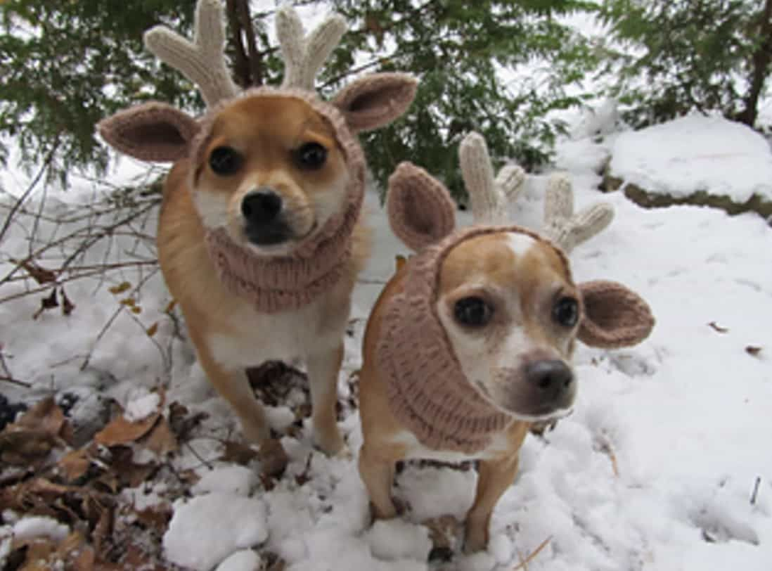 Knitted Dog Hats With Ears Easy Free Patterns Knitting Pinterest